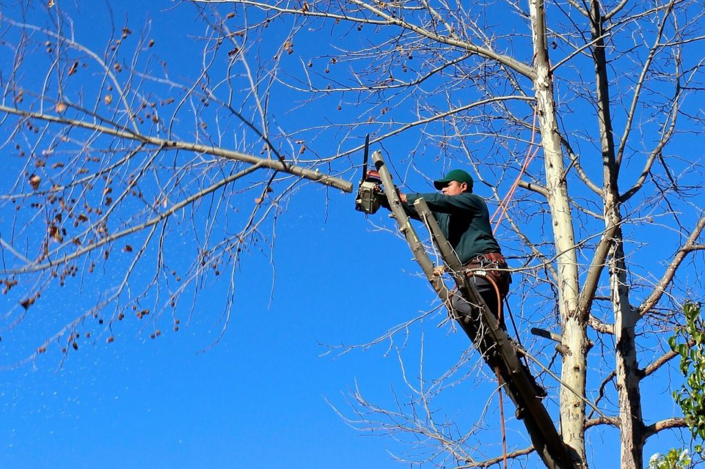 Contact Us-Homestead FL Tree Trimming and Stump Grinding Services-We Offer Tree Trimming Services, Tree Removal, Tree Pruning, Tree Cutting, Residential and Commercial Tree Trimming Services, Storm Damage, Emergency Tree Removal, Land Clearing, Tree Companies, Tree Care Service, Stump Grinding, and we're the Best Tree Trimming Company Near You Guaranteed!