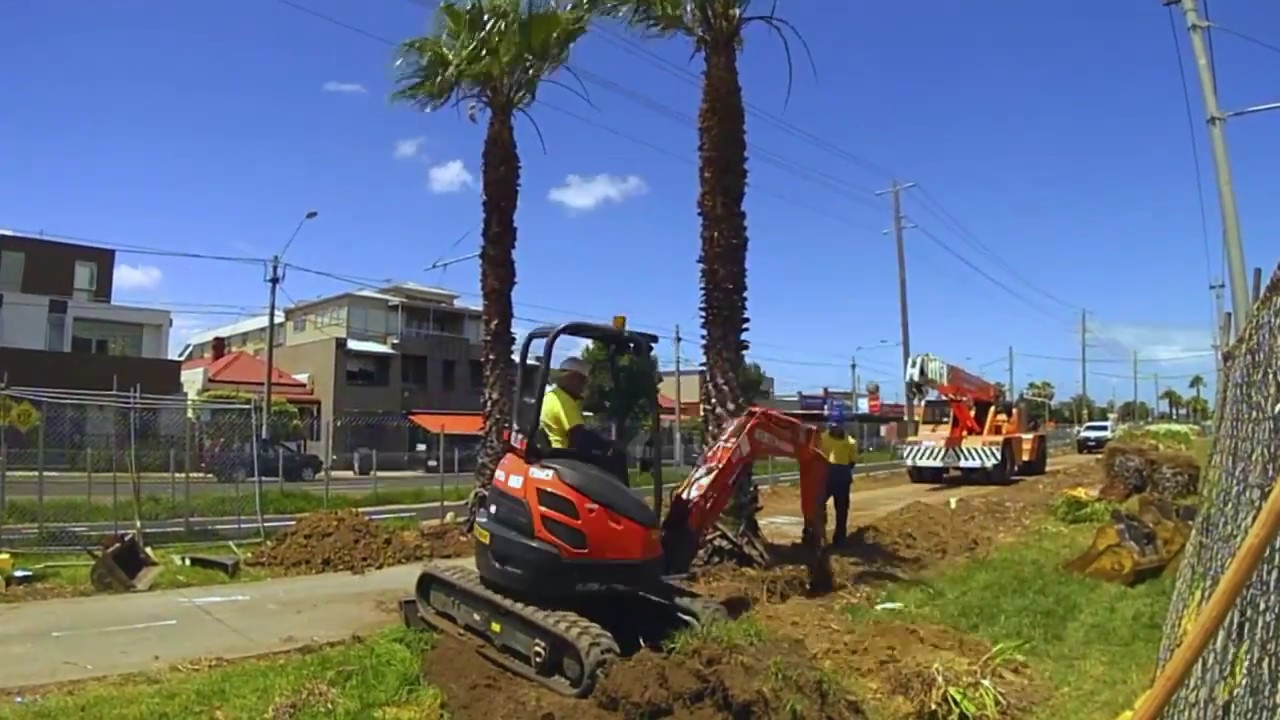 Palm Tree Removal-Homestead FL Tree Trimming and Stump Grinding Services-We Offer Tree Trimming Services, Tree Removal, Tree Pruning, Tree Cutting, Residential and Commercial Tree Trimming Services, Storm Damage, Emergency Tree Removal, Land Clearing, Tree Companies, Tree Care Service, Stump Grinding, and we're the Best Tree Trimming Company Near You Guaranteed!