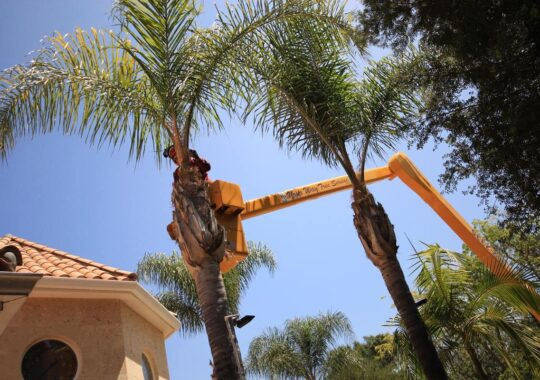 Palm Tree Trimming-Homestead FL Tree Trimming and Stump Grinding Services-We Offer Tree Trimming Services, Tree Removal, Tree Pruning, Tree Cutting, Residential and Commercial Tree Trimming Services, Storm Damage, Emergency Tree Removal, Land Clearing, Tree Companies, Tree Care Service, Stump Grinding, and we're the Best Tree Trimming Company Near You Guaranteed!