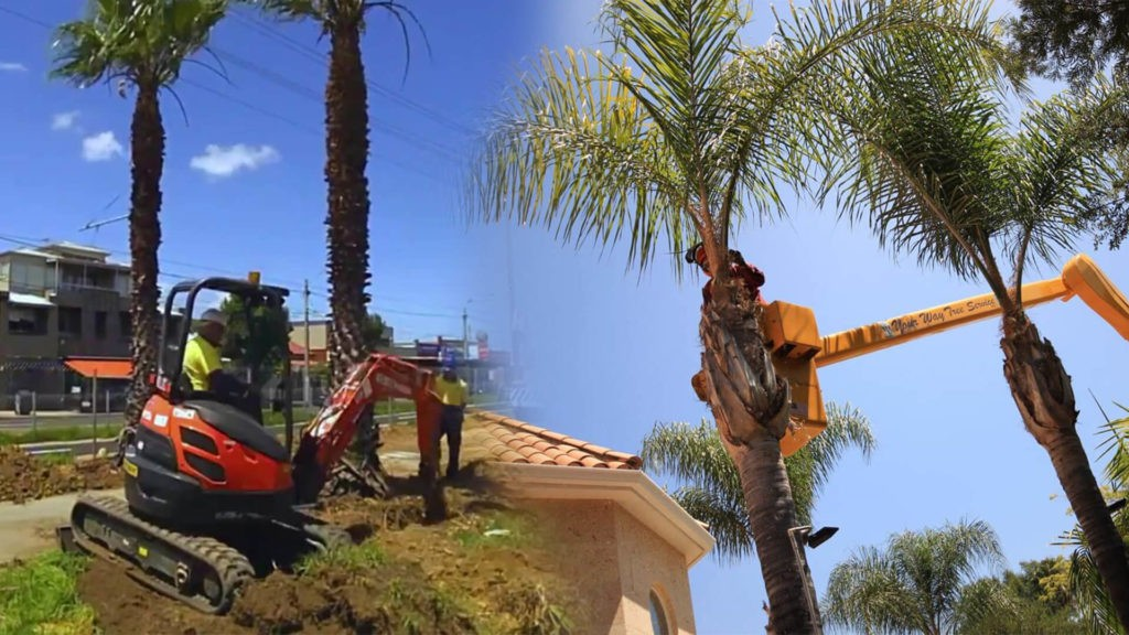 Palm tree trimming & palm tree removal-Homestead FL Tree Trimming and Stump Grinding Services-We Offer Tree Trimming Services, Tree Removal, Tree Pruning, Tree Cutting, Residential and Commercial Tree Trimming Services, Storm Damage, Emergency Tree Removal, Land Clearing, Tree Companies, Tree Care Service, Stump Grinding, and we're the Best Tree Trimming Company Near You Guaranteed!