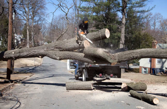 Residential Tree Services-Homestead FL Tree Trimming and Stump Grinding Services-We Offer Tree Trimming Services, Tree Removal, Tree Pruning, Tree Cutting, Residential and Commercial Tree Trimming Services, Storm Damage, Emergency Tree Removal, Land Clearing, Tree Companies, Tree Care Service, Stump Grinding, and we're the Best Tree Trimming Company Near You Guaranteed!