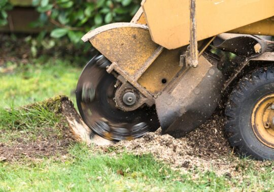 Stump Grinding-Homestead FL Tree Trimming and Stump Grinding Services-We Offer Tree Trimming Services, Tree Removal, Tree Pruning, Tree Cutting, Residential and Commercial Tree Trimming Services, Storm Damage, Emergency Tree Removal, Land Clearing, Tree Companies, Tree Care Service, Stump Grinding, and we're the Best Tree Trimming Company Near You Guaranteed!