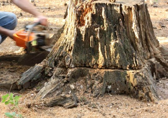 Stump Removal-Homestead FL Tree Trimming and Stump Grinding Services-We Offer Tree Trimming Services, Tree Removal, Tree Pruning, Tree Cutting, Residential and Commercial Tree Trimming Services, Storm Damage, Emergency Tree Removal, Land Clearing, Tree Companies, Tree Care Service, Stump Grinding, and we're the Best Tree Trimming Company Near You Guaranteed!