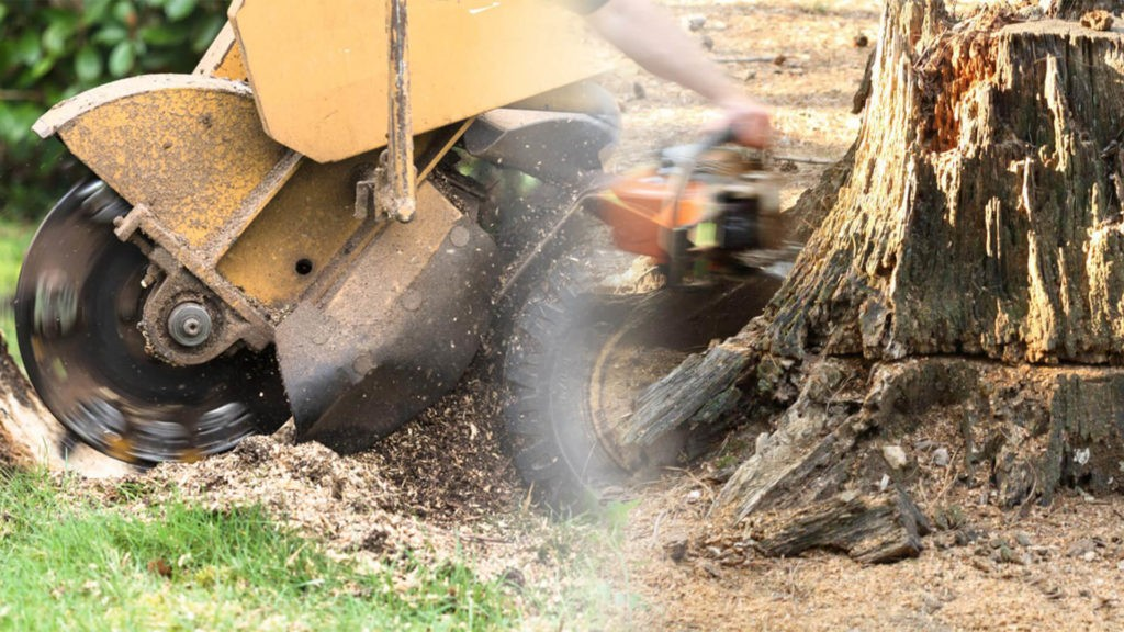 Stump grinding & removal-Homestead FL Tree Trimming and Stump Grinding Services-We Offer Tree Trimming Services, Tree Removal, Tree Pruning, Tree Cutting, Residential and Commercial Tree Trimming Services, Storm Damage, Emergency Tree Removal, Land Clearing, Tree Companies, Tree Care Service, Stump Grinding, and we're the Best Tree Trimming Company Near You Guaranteed!
