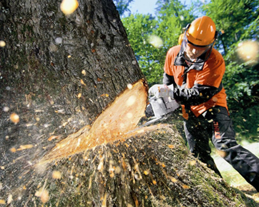 Tree Cutting-Homestead FL Tree Trimming and Stump Grinding Services-We Offer Tree Trimming Services, Tree Removal, Tree Pruning, Tree Cutting, Residential and Commercial Tree Trimming Services, Storm Damage, Emergency Tree Removal, Land Clearing, Tree Companies, Tree Care Service, Stump Grinding, and we're the Best Tree Trimming Company Near You Guaranteed!
