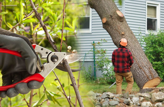 Tree pruning & tree removal-Homestead FL Tree Trimming and Stump Grinding Services-We Offer Tree Trimming Services, Tree Removal, Tree Pruning, Tree Cutting, Residential and Commercial Tree Trimming Services, Storm Damage, Emergency Tree Removal, Land Clearing, Tree Companies, Tree Care Service, Stump Grinding, and we're the Best Tree Trimming Company Near You Guaranteed!